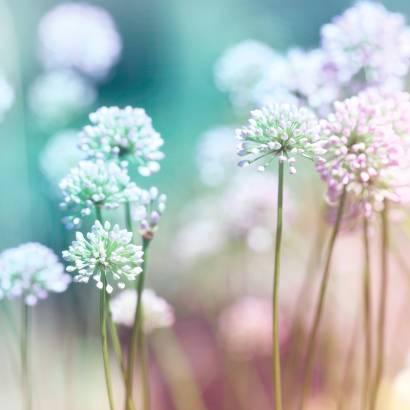 Фотообои Нежные цветы | арт.28589