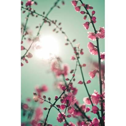 Фотообои Розовые дельфиниумы | арт.28590