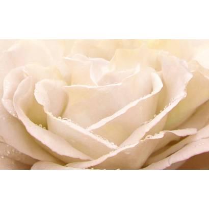 Фотообои Кремовая роза | арт.28593