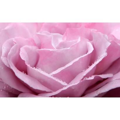 Фотообои Розовая роза | арт.28594