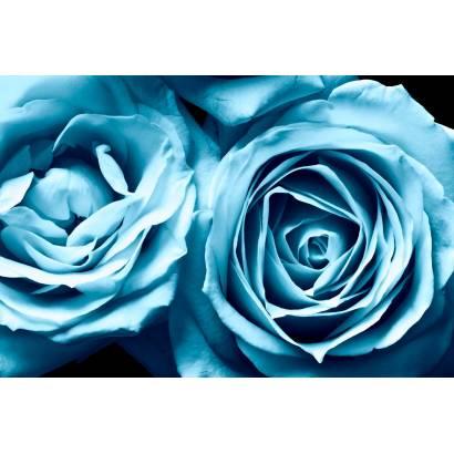 Фотообои Голубые розы | арт.28595