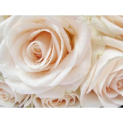 Фотообои Розы с капельками воды | арт.28598