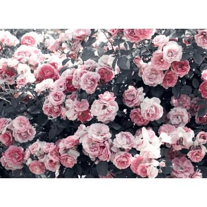 Фотообои Розовый куст | арт.28601