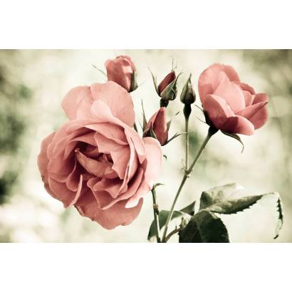 Фотообои Роза | арт.28602