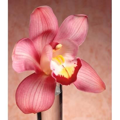 Фотообои Орхидея | арт.2861