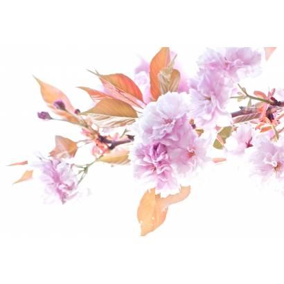 Фотообои Ветвь цветущей сакуры | арт.28611