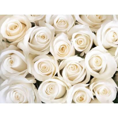 Фотообои Белые розы | арт.28616