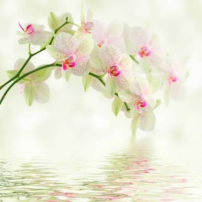Фотообои Белая орхидея | арт.28619