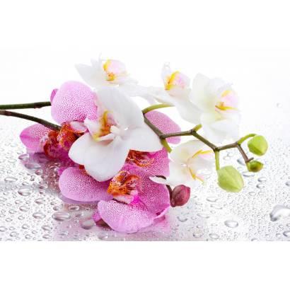 Фотообои Орхидеи | арт.28621