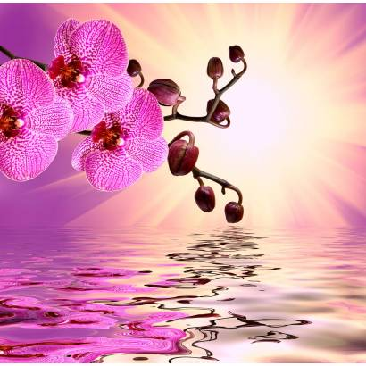 Фотообои Розовая орхидея | арт.28622