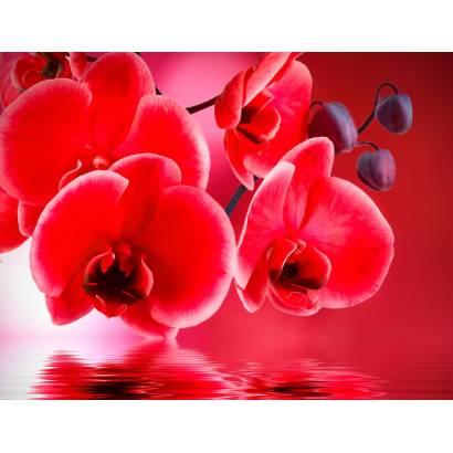 Фотообои Красная орхидея | арт.28623