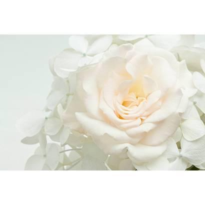 Фотообои Белая роза | арт.28624