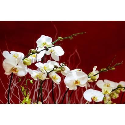 Фотообои Орхидея | арт.28626