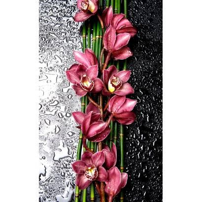 Фотообои Орхидеи | арт.28627