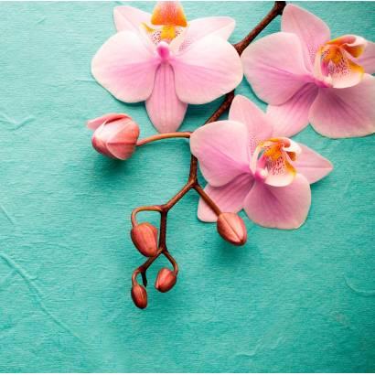 Фотообои Орхидея | арт.28630