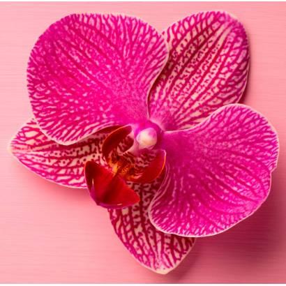 Фотообои Орхидея | арт.28632