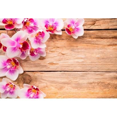Фотообои Розовые орхидеи | арт.28634