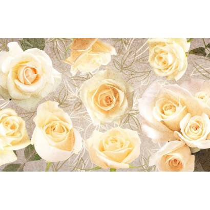 Фотообои Кремовые розы | арт.28636