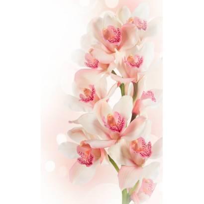Фотообои Нежная орхидея | арт.28643