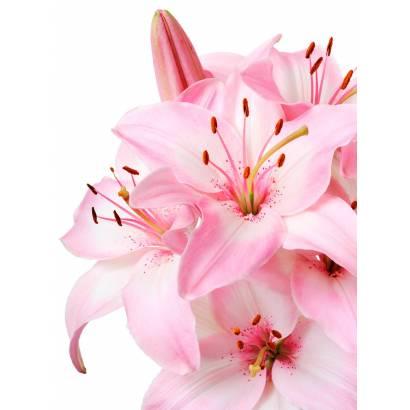 Фотообои Розовые лилии | арт.28644