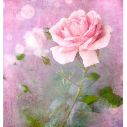 Фотообои Роза | арт.28646