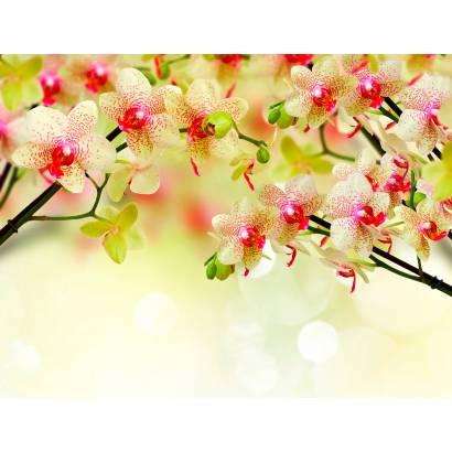 Фотообои Орхидеи | арт.28651
