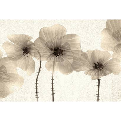 Фотообои Маки в сепии | арт.28652