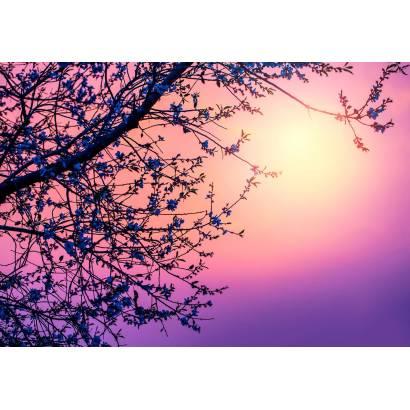 Фотообои Ветка дерева | арт.28657