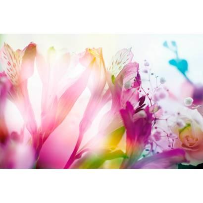 Фотообои Цветы | арт.28661
