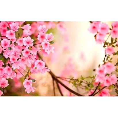 Фотообои Сакура в цвету | арт.28662