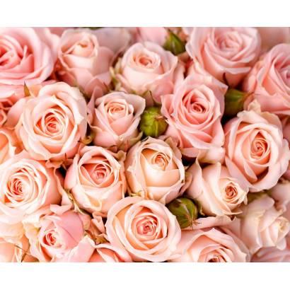 Фотообои Нежные розы | арт.28670