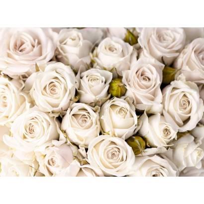 Фотообои Белые розы | арт.28671
