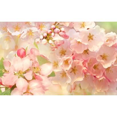 Фотообои Яблоневый цвет | арт.28675