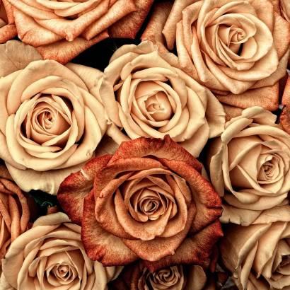 Фотообои Розы | арт.28678
