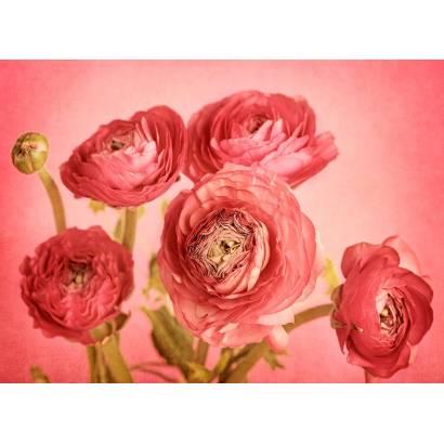 Фотообои Розы | арт.28679