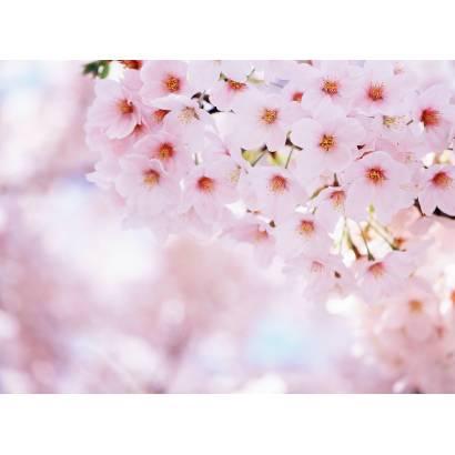 Фотообои Сакура | арт.2896