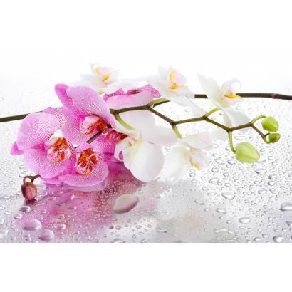 Фотообои Ветка орхидеи | арт.28698