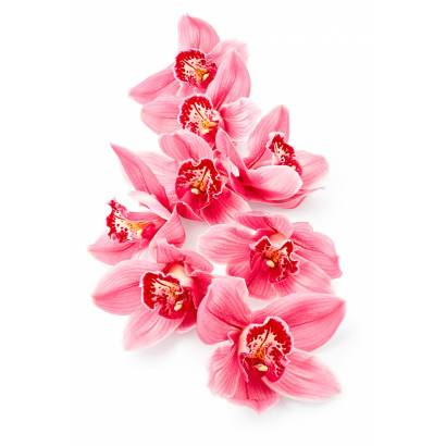 Фотообои Красные орхидеи | арт.28699