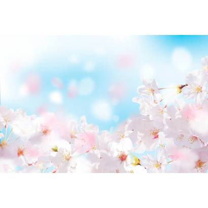 Фотообои Цветение яблони | арт.28700