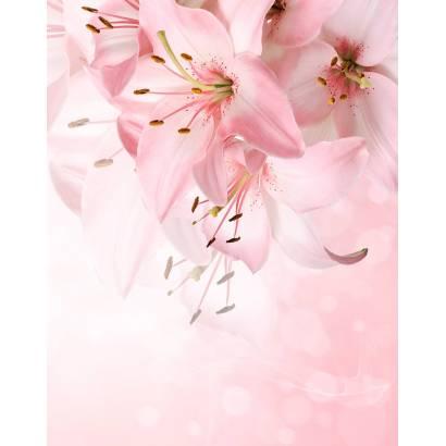 Фотообои Лилии на розовом фоне 2 | арт.28700